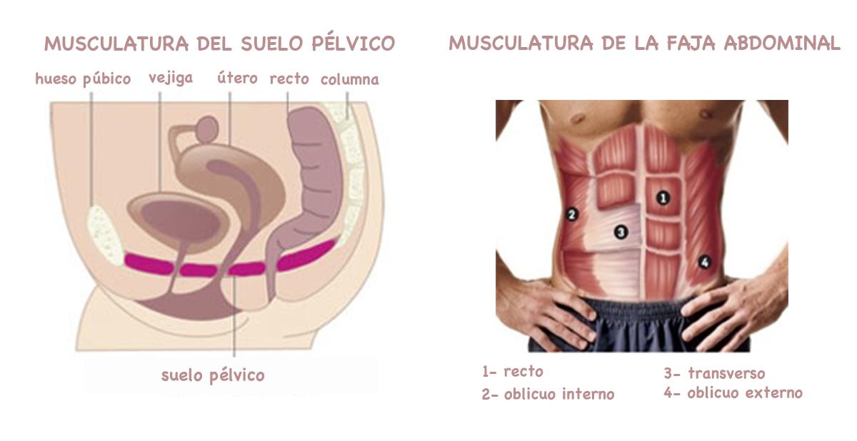 Suelo Pélvico y Faja Abdominal- Abdominales Hipopresivos